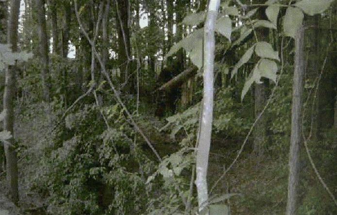 Still van een video van Bigfoot Global LLC waarop een vermeende Bigfoot of Sasquatch te zien is.