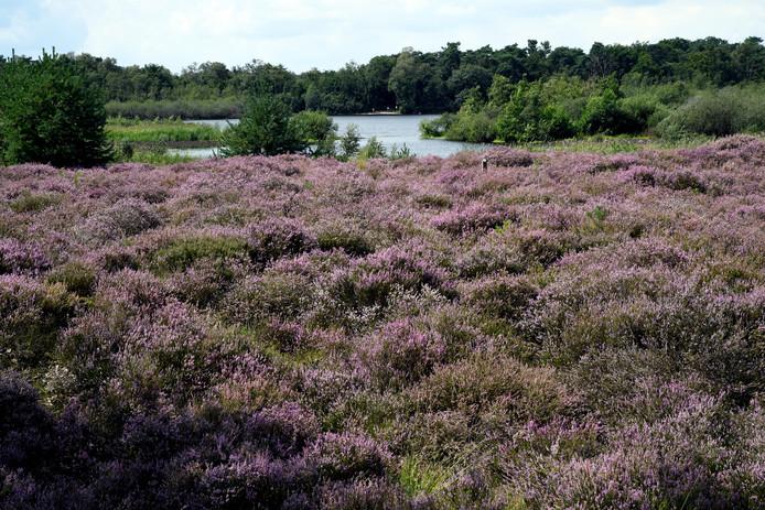 De Kampina is een van de stikstofgevoelige natuurgebieden in Brabant.