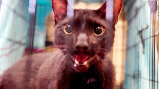 Zwarte kat overleeft instorting flatgebouw in Miami en wordt herenigd met zijn familie