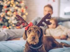 Que Noël soit la plus belle fête de l'année, pour votre chien aussi!