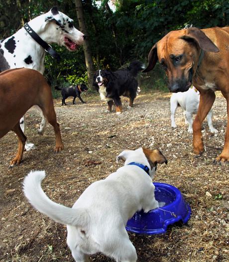 Hond kan in Gennep helemaal losgaan op eigen speelplaats