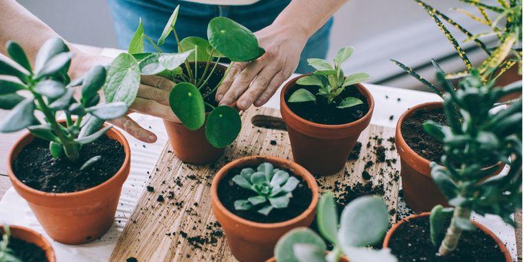 je-kamerplanten-verwennen-zo-zet-je-ze-extra-in-het-zonnetje.jpg