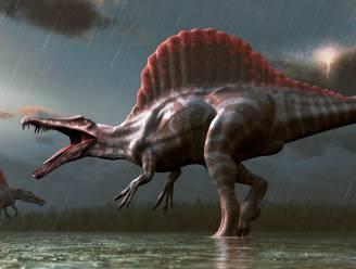 'Riviermonster' Spinosaurus, de eerste bekende dinosaurus die in het water leefde