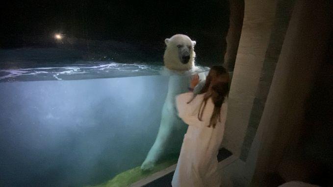 IJsbeer zorgt voor magisch moment op 'coronavakantie'