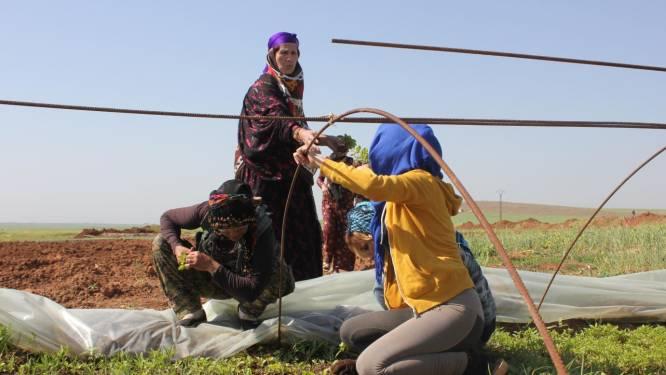 Verkracht en misbruikt: Jezidi vrouwen die ontsnapten aan IS stichten vrouwelijke commune