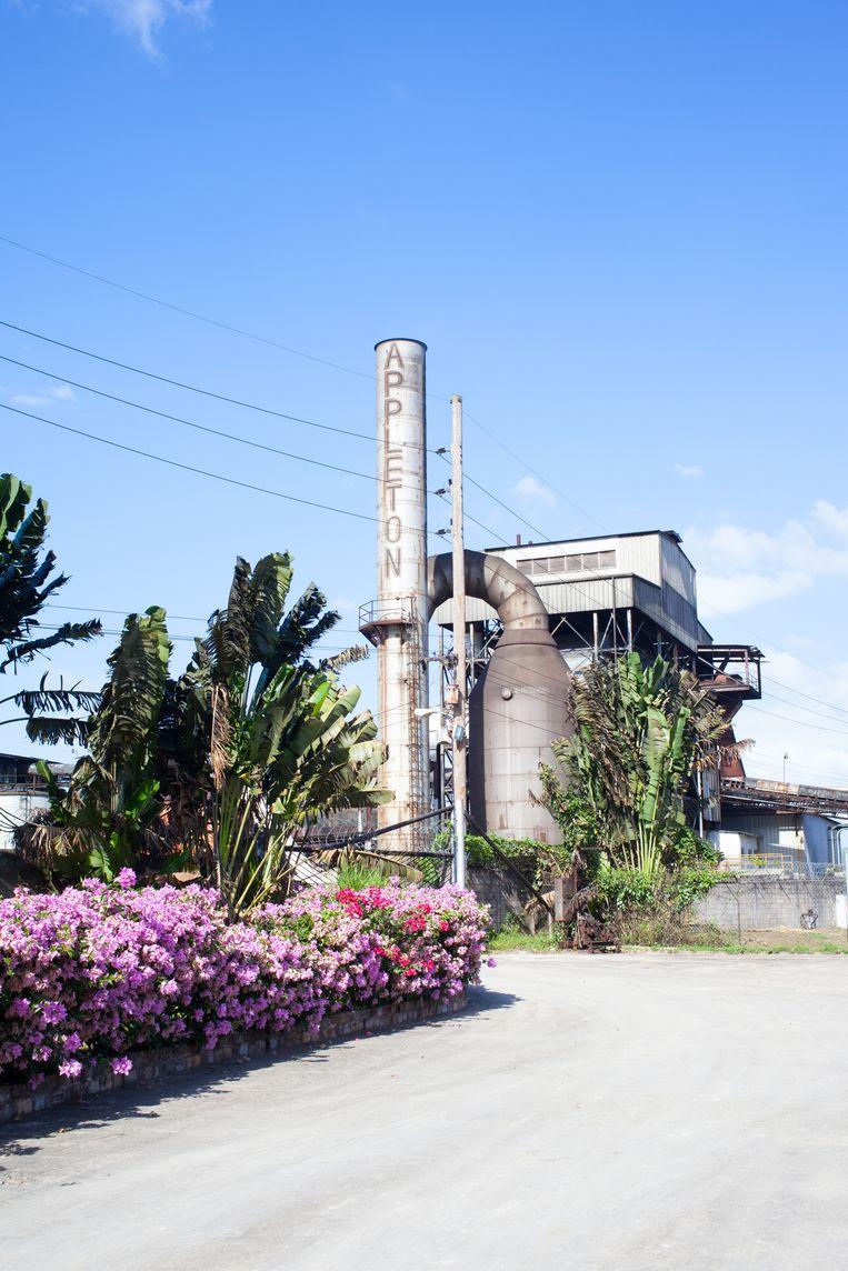 In Cornwell ligt Appleton Estate, de grootste van de zes rumproducenten van Jamaica. Beeld Ringo Gomez Jorge