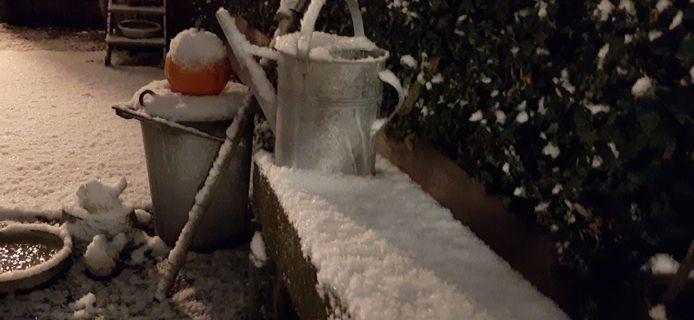 Sneeuw in de tuin.