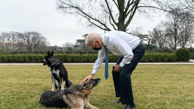 Duitse herders Joe Biden weg uit Witte Huis na agressief gedrag