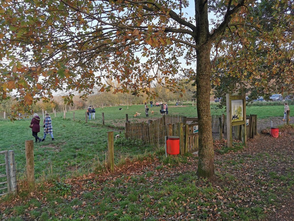 De huidige hondenlosloopweide aan het Rhodesgoed in Kachtem.