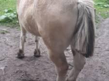 Paard mishandeld en verminkt in Goirle: onbekenden knippen manen en staart af