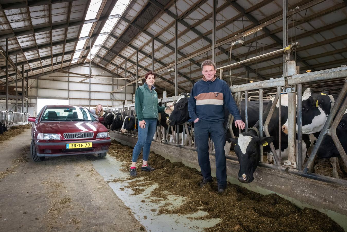 Met de auto kunnen bezoekers door de stal rijden bij melkveebedrijf van Adrichem.