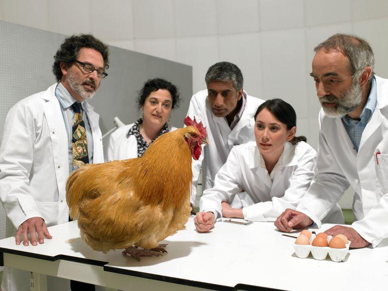 Wetenschappers bestuderen een kip in een laboratorium. (De bijschriften zijn die van de fotobureaus) Beeld Getty Images