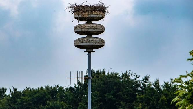Gemeente Raalte kijkt met een wildcamera of ooievaars op de zendmast gevlogen zijn