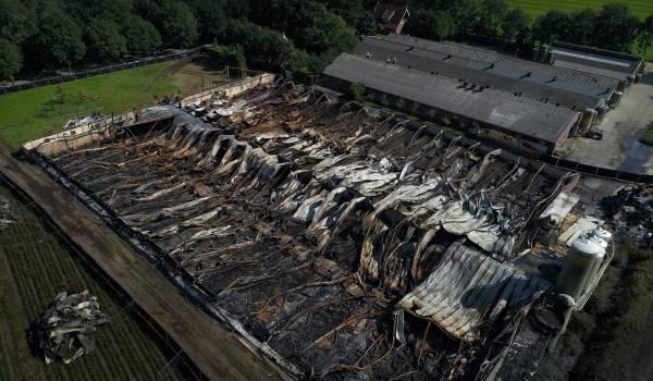 Varkenshouder Kees van der Meijden sloeg na een stalbrand een volledig nieuwe weg in