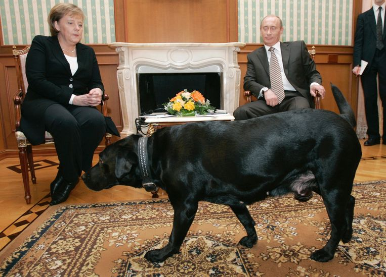 'Poetin liet zijn labrador de zaal inkomen, terwijl hij maar al te goed wist dat Merkel doodsbang is van honden. Dat was werkelijk een zwaktebod.' Beeld BELGAIMAGE