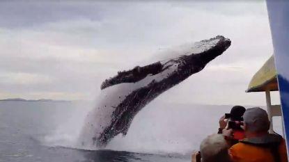 Walvis verrast toeristen met sprong vlak voor boot