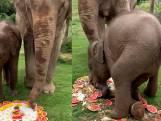 Olifant wordt 70 jaar en krijgt taart, maar dat is buiten kleinzoon gerekend