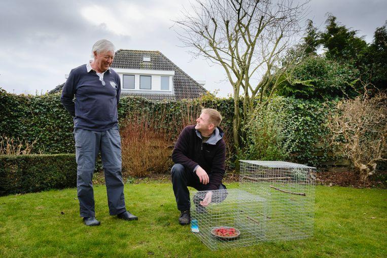 Johannes Fokkens (r) vangt in opdracht van de provincie treurspreeuwen. Hier plaatst hij een kooi in de tuin van de familie Ennema waar de slimme vogel weleens is opgedoken. Beeld Sjaak Verboom