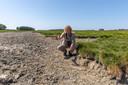 Wannes Castelijns, natuurbeheerder van het Zeeuwse Landschap, laat in de buurt van Wolphaartsdijk zien dat de waterpoelen waar weidevogels fourageren om hun jongen te voeden, zijn drooggevallen.
