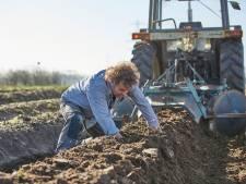 De asperges in Bronckhorst zijn al bijna 'wakker', maar Pasen halen ze niet