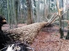 Dringend advies Staatsbosbeheer: 'Mijd de bossen in West-Brabant!'