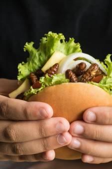 Voor het eerst keurt Brussel insect goed voor consumptie: na meelworm volgen er zeker méér