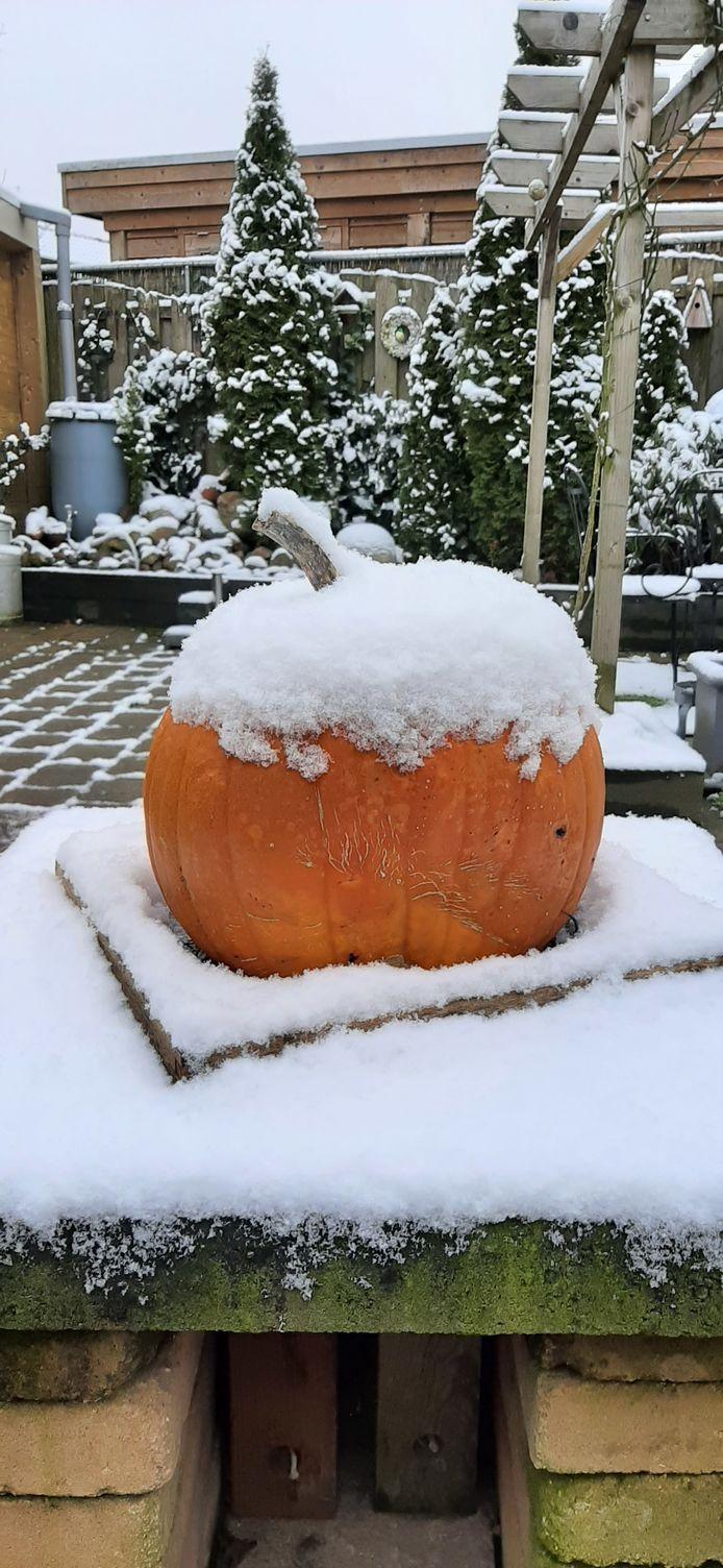 Sneeuw in de achtertuin.