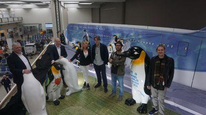 27 pinguïns geland op luchthaven Oostende: koop er één en steun het Blauwe Kruis (prijzen van 200 tot 10.000 euro)
