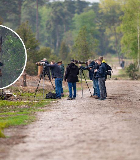 Vogelspotters trekken naar Archemerberg om glimp van bijzondere lammergier op te vangen: 'Geeft een enorme kick'