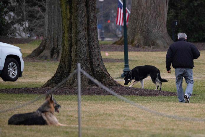 Bidens honden Champ en Major aan het Witte Huis.