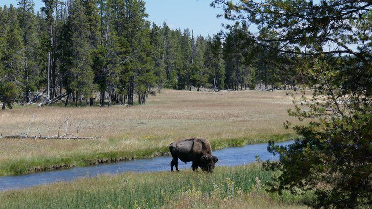 Yellowstone Beeld Stefan Pasma