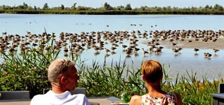 Van kemphanen tot bruine kiekendieven: 'De Oostvaardersplassen is een uniek gebied'
