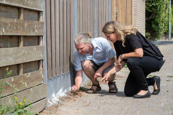Jinze Noordijk en Anna Möler bekijken de mierenplaag.