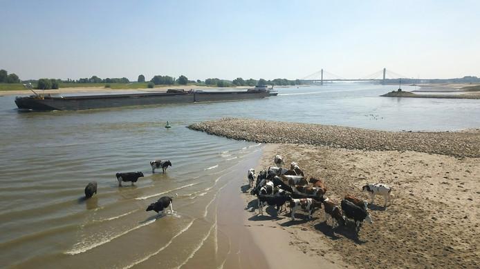 Foto: VidiPhoto  De drukst bevaarde rivier van Europa, De Waal, is door de langdurige droogte maandag geslonken tot een smalle stroom.
