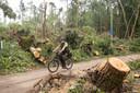Duizenden bomen gingen om in het Leersumse Veld.