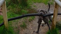 Romeo wil deze stok koste wat het kost meenemen naar huis (maar dat is moeilijker dan hij dacht)