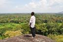 Cacaoyers plantés aux Cameroun grâce à Treedom.