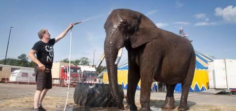 Moet olifant Buba deze keer écht weg uit het circus?