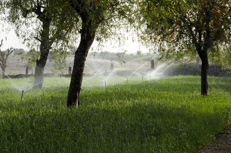 Agroforestry, waarbij gewassen onder bomen worden geteeld.