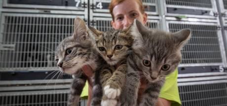 Asiel in Kampen komt om in de kittens: 'Het zijn er extreem veel'