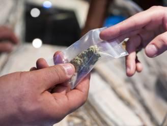 Zeven op de tien cannabiswinkels in overtreding