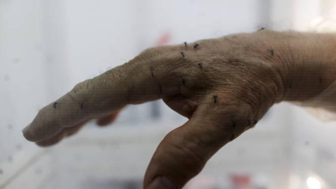 Panama onderzoekt inzet genetisch gemanipuleerde muggen tegen zikavirus