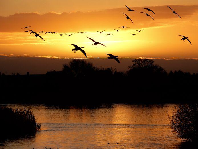 Een prachtige zonsopkomst bij de Lek.