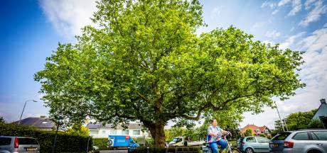 Waar staan de mooiste bomen van de Hoeksche Waard en waarom moeten die tot in de eeuwigheid blijven staan?
