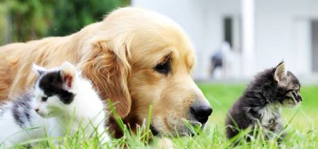 Les chiens et chats pourraient contribuer à la propagation du variant britannique