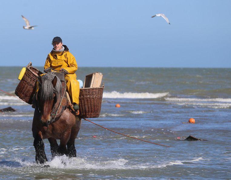 Nele vist garnalen in zee voor haar examen.