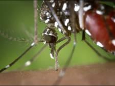 Dangereux, le moustique tigre?