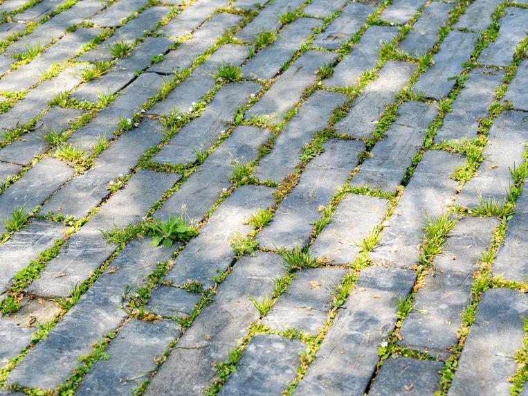 Grassy masonry floor between brick seams Beeld Getty Images