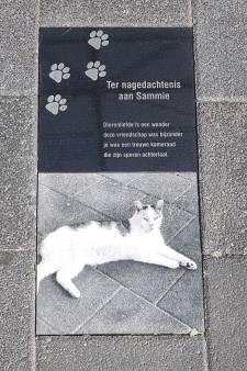 'Sammie de supermarktkat' krijgt gedenkteken: 'Hier lag hij altijd in de weg'