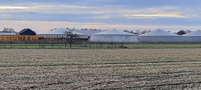 Een mestfabriek in Nistelrode.